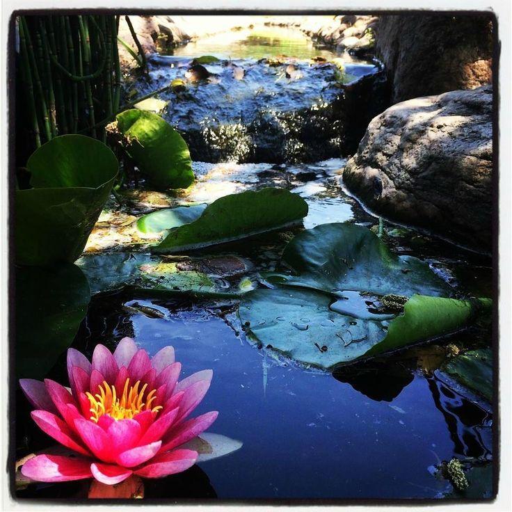 Un paraiso! - Comentarios del hotel La Matilda, Santa Rosa de Calamuchita, Argentina - TripAdvisor