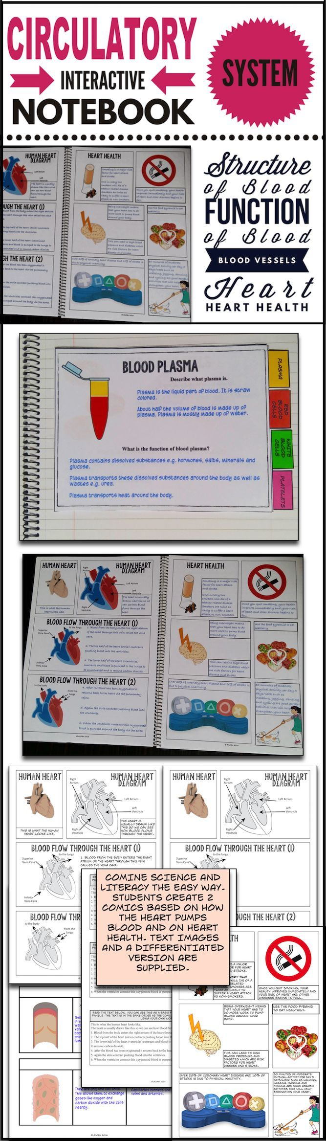 This differentiated Circulatory System Interactive Notebook has comics, activities, diagrams and foldables on all the components of the circulatory system including the heart, arteries, veins, capillaries. 2 comics on how the heart pumps blood and heart health are included.