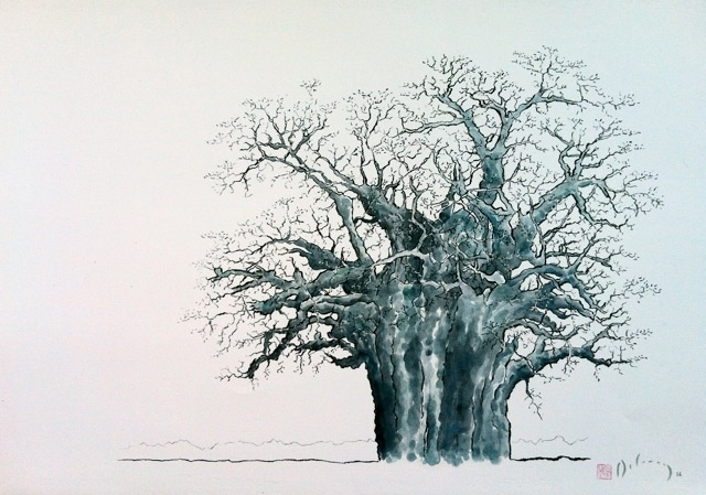My Grandfather's Baobab (my drawing in charcoal & oil). Delaney