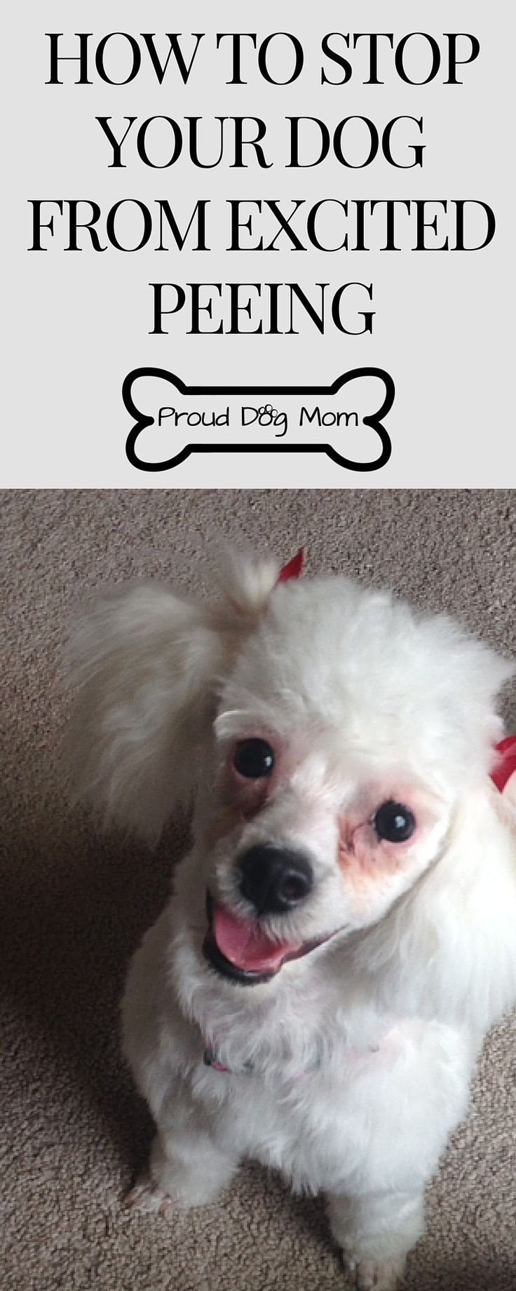 1000 images about proud dog mom on pinterest for dogs for How to train your dog to pee