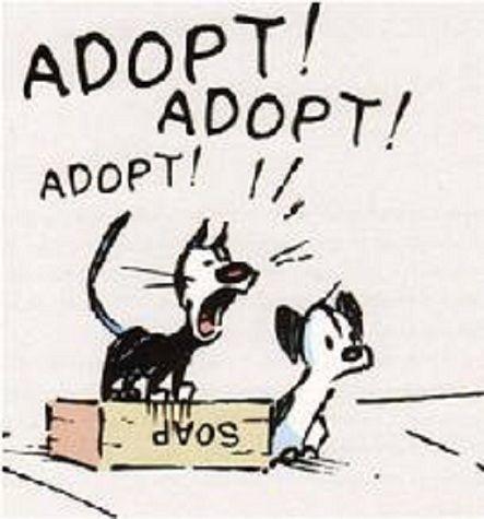 animal adoption on pinterest adoption tommy lee and animal adoption