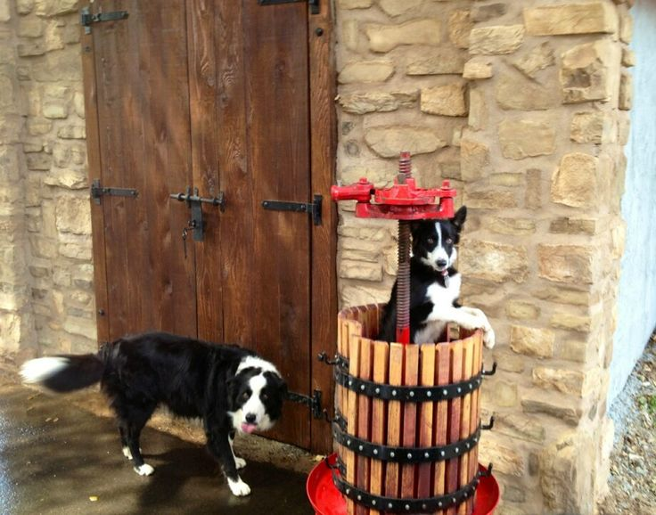 The winery dogs at Keys Creek Winery