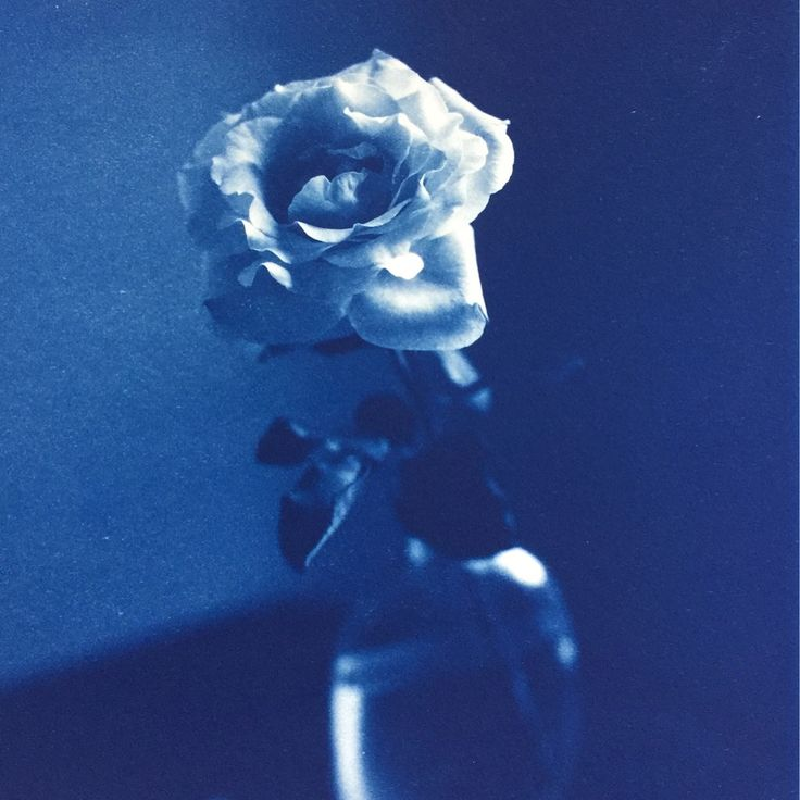 IMPRESSED: The Print Center Benefit Auction includes these works by John Dugdale Yoonmi Nam and Shelley Thorstensen | Place your Bid Today  visit our website for details! Tickets Available Now for Saturday December 2nd.  John Dugdale Garden Rose Stone Ridge Cyanotype 1997 | Starting Bid: $720 | Value: $1200  Yoonmi Nam Noodle Lithograph 2017 | Starting Bid: $480 | Value: $800  Shelley Thorstensen Tree House Monoprint with Chine collé 2009 | Starting Bid: $600 | Value: $1000  ##ThePrintCenter…