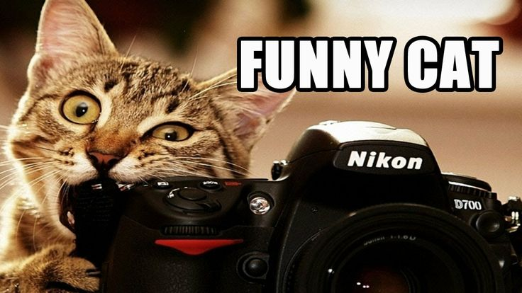 Poto Lucu Channel have thousands of funny cat videos. We have the most interesting Funny cat Videos for your viewing pleasure. We're here to amuse you and no one does it better than Poto Lucu. These Funny cat Videos will have you laughing, smiling and simply in awe at how much stuff there is to put on your cat!