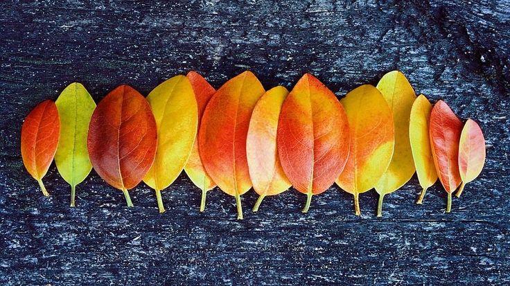 Őszi lakberendezési tippek - Díszpárna Blog