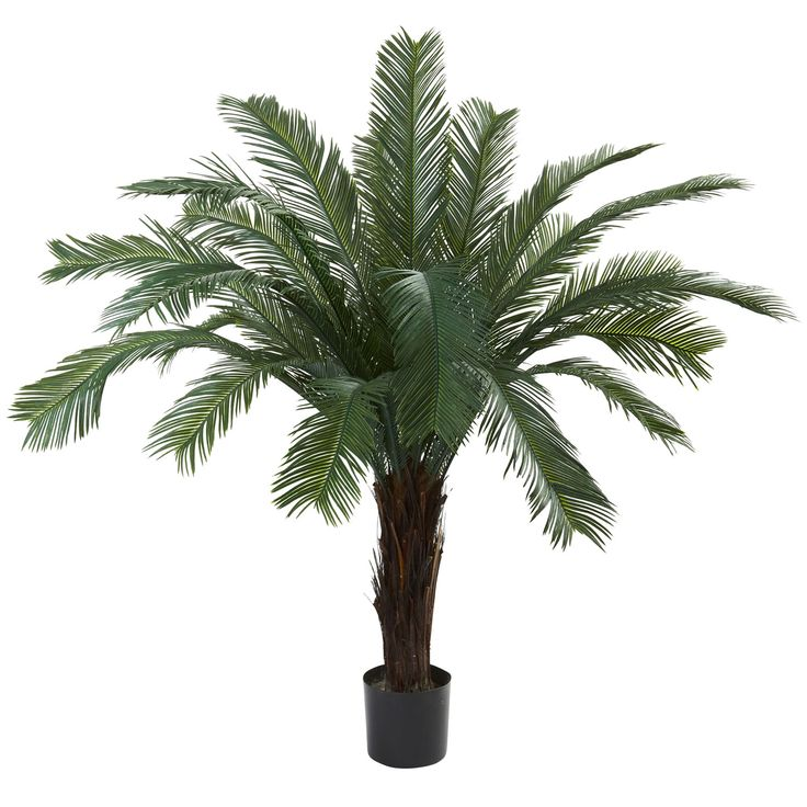 "Here's a tropical / jungle tree that looks so real, you'll be reaching for your machete to get through (we're kidding - put the machete down!) This Cycas tree stands 5 feet in height, and is it ever pretty. With a beautiful trunk that explodes into green, leafy fronds, this is an ideal home or office decoration. Plus, it's weather and UV resistant, making it a perfect ""indoor / outdoor"" decorating option. Makes a fine gift, too."