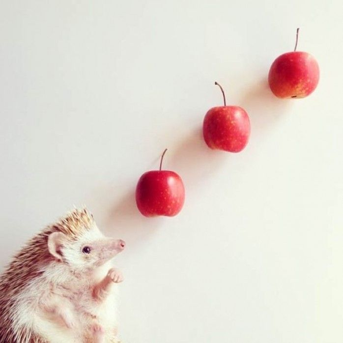 Best Darcy De Egel Images On Pinterest Happiness Pigs And - Darcy cutest hedgehog ever