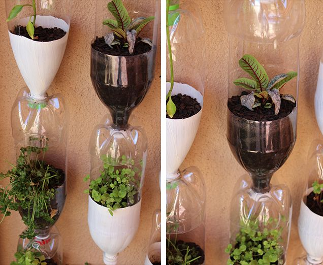 Recycled Plastic Bottles used as planters.  Love how the water filters down through the bottles.