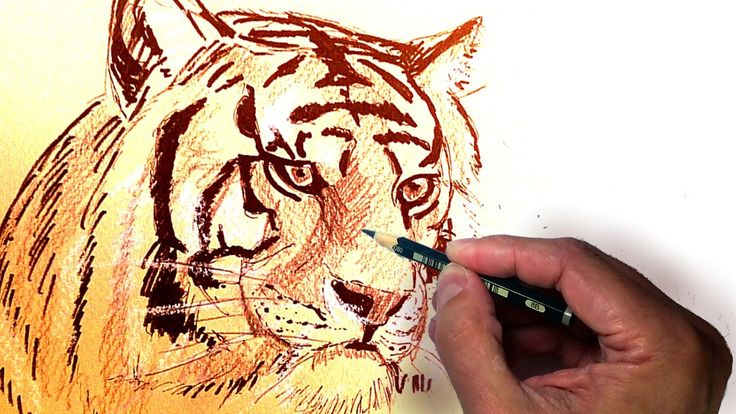 Como Dibujar un Tigre Realista Usando Lápiz, Tinta y Tiza, tecnicas de d...