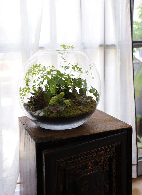 Just beautiful.  I'm going to try planting a fern in a fish bowl.  I hope it looks this good.