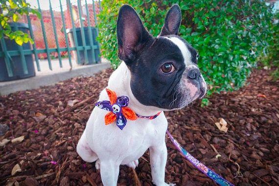 Halloween Dog collar Custom Dog collar dog harness dog