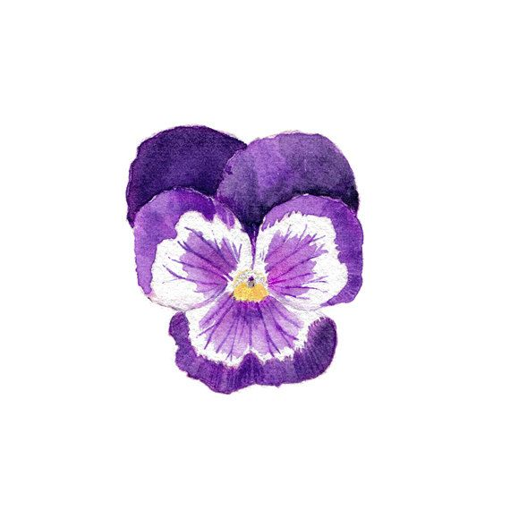 Pansy Watercolor Print - Purple