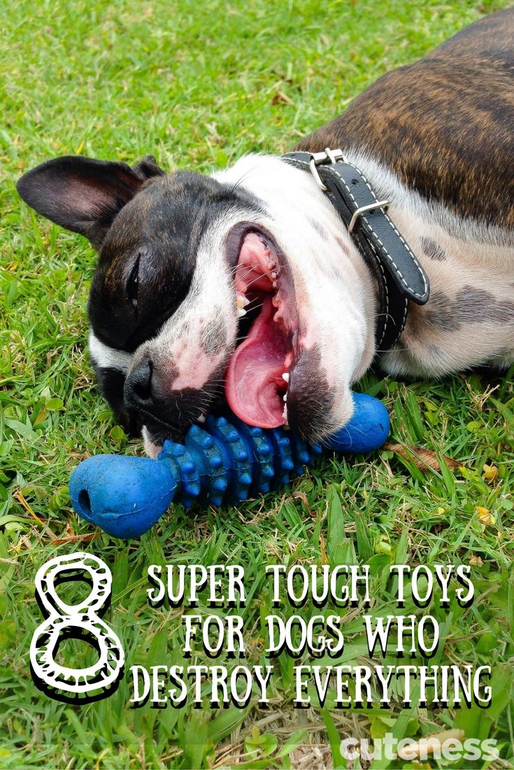 These super tough dog toys won't last forever, but they will definitely last longer!