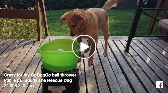 Ce jeu est extra pour que le chien s'amuse tout seul avec une balle et le chien a …