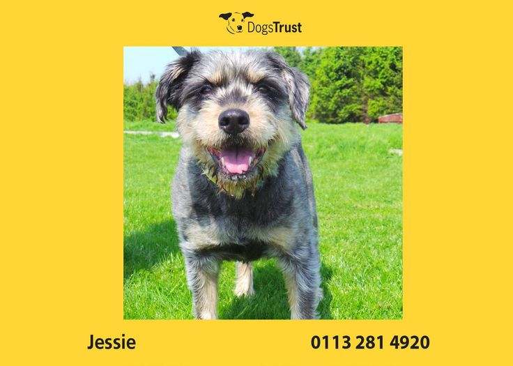 Poor Jessie at Dogs Trust Leeds found herself looking for a new home as her owner tragically passed away. She is used to a quiet home without young children. She also likes her home comforts and used to sleep on her owners bed.