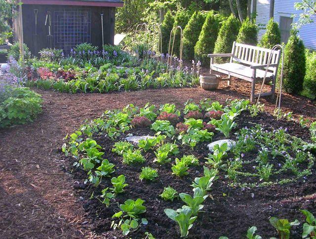 221 best vegetable garden ideas images on pinterest - Kitchen Garden Ideas