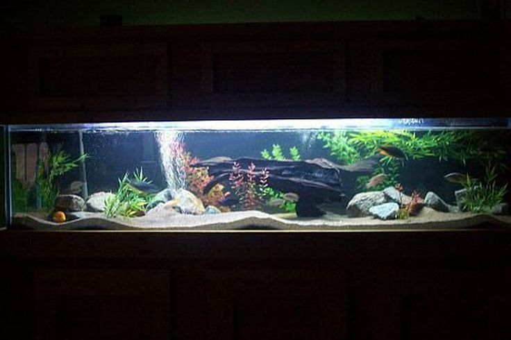 Night view 100 gallon african cichlid tank fish tank for African cichlid tank decoration