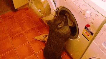 Hate doing laundry? Try a wombat
