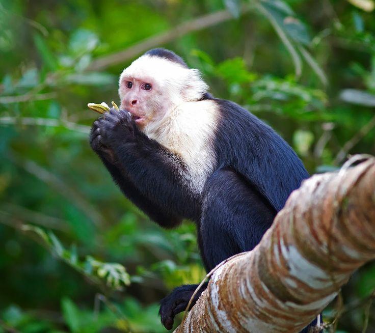 BioOrbis: Plantas Repelente e Macacos-Prego