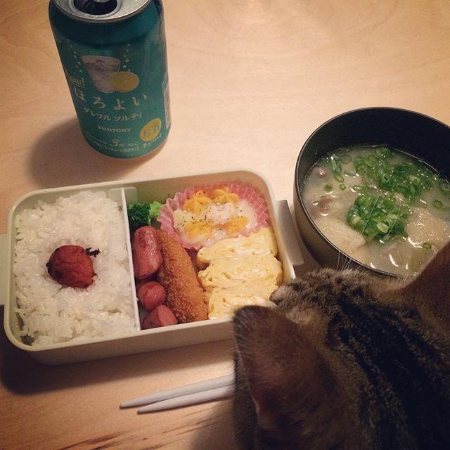 #dinner#cooking#おうちごはん#自炊生活#ひとりごはん#ほろよい#味噌汁#朝#忘れた#お弁当#愛猫#猫#あめ#癒し#可愛い#大好き#今日はひとり#さみしい 今日は職場で倒れてしまった。2週間前にも友達の大切な日にやらかしてしまった。どうかしてる。