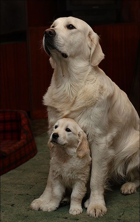 So cute adult dog and little pup.