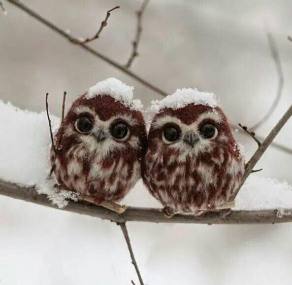Little owls. Too cute.