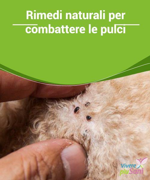 Rimedi #naturali per combattere le pulci   Per #combattere le #pulci possiamo utilizzare diversi #prodotti naturali direttamente sui nostri animali domestici o anche per #disinfestare gli ambienti.
