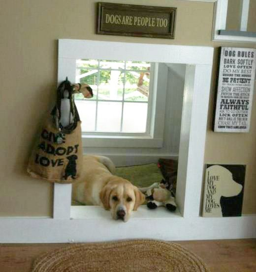 Check out these house mods for pets at the myWebRoom Blog! #Dogs #DIY Dog Furniture, Dog Furniture Ideas, Modern Dog Decor, Cool Dog Furniture