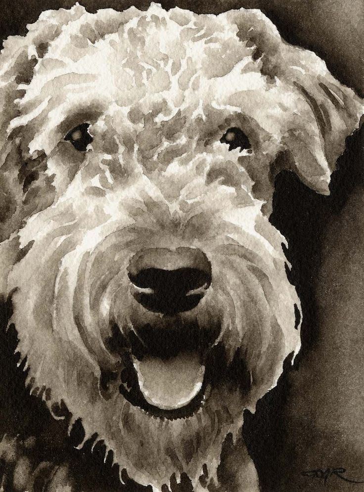 AIREDALE TERRIER Dog Art Sepia Print Signed by Artist DJ Rogers. $12.50, via Etsy.