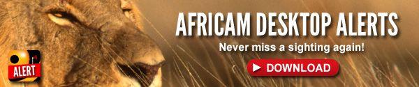 Africam Multi-View Safari