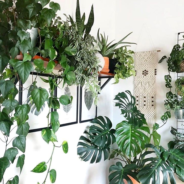 living room feng shui furniture placement in 2020  plants