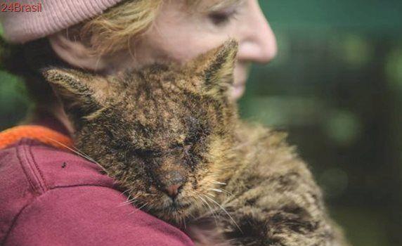 Protetora transforma vida de gato doente e invisível em abrigo