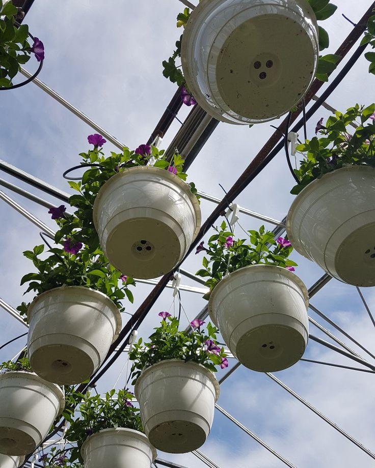Högt upp i våra växthus växer sommarblommorna sig stora. Kom och köp din favorit och njuta av vackra blommor hela sommaren! # #lillahults #hosossblirnärodlatstort