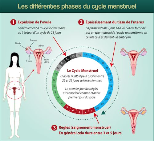 1000 cycle menstruel pinterest cystite. Black Bedroom Furniture Sets. Home Design Ideas
