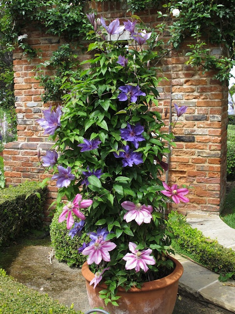 128 Best Clematis Clematis Clematis Images On Pinterest