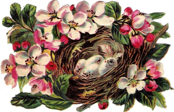 Oblaten Glanzbild scrap die cut chromo  Vogel Nest  14cm Ei egg  Blüte  blossom