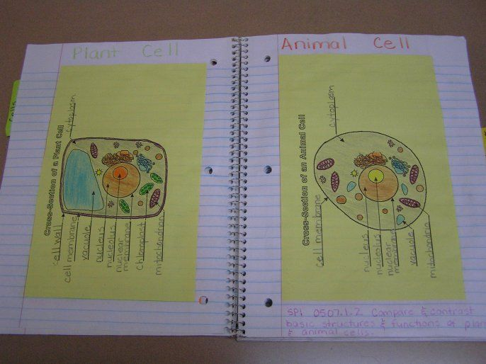 1000+ images about School project on Pinterest | Cell ...