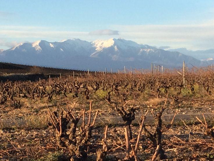Le Domaine RETY en face du Mont Canigou enneigé
