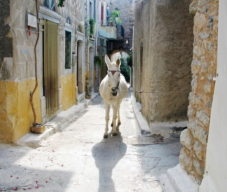 A white donkey wandering in a narrow alley of Chios town