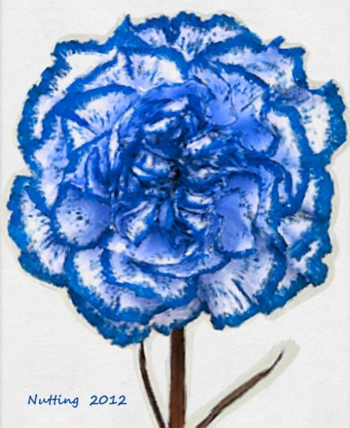 Blue Carnation - I have used this carnation and it is very very pretty - again we spoke about other flowers but as I find some flowers that we didn't discuss, i want to pass on to you
