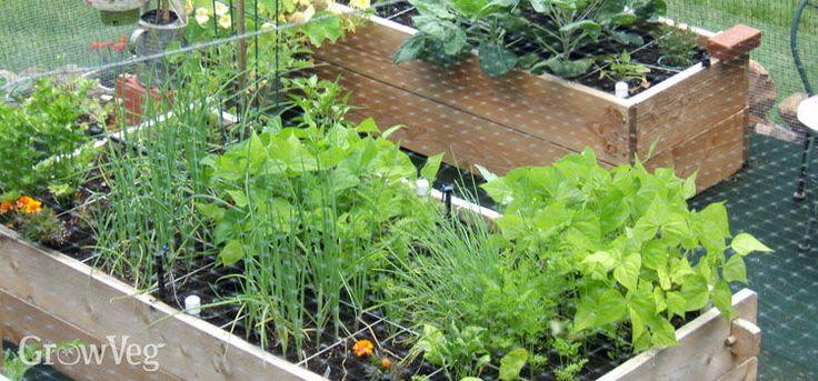 79 best gardening vegetable garden images on pinterest for Vegetable plot ideas