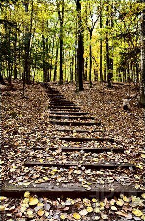 Wooden Stairs in forest Sturgeon Bay Wisconsin Potawatomi ...