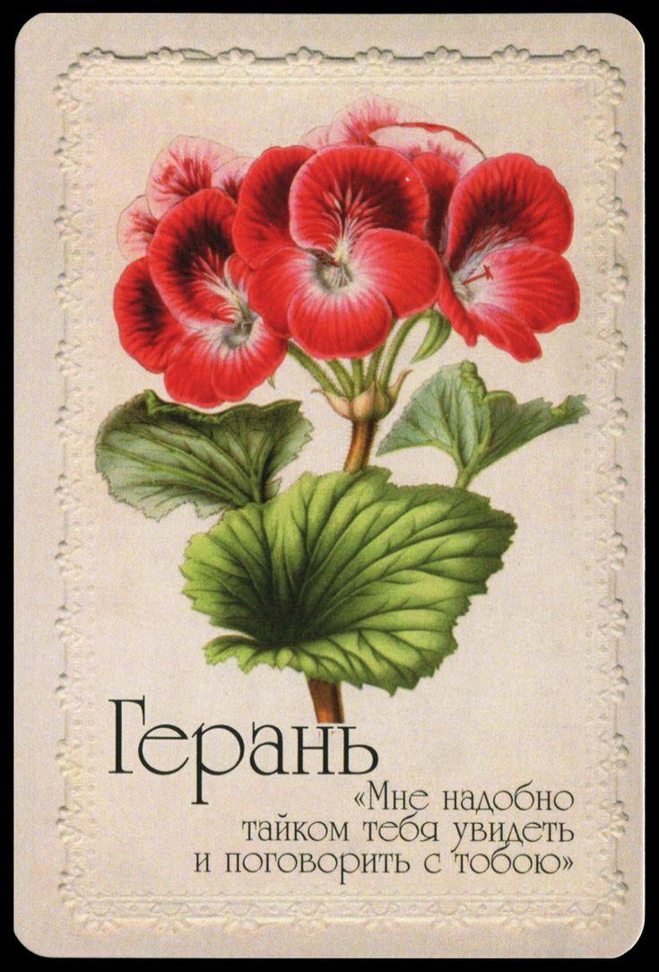Картинки язык цветов