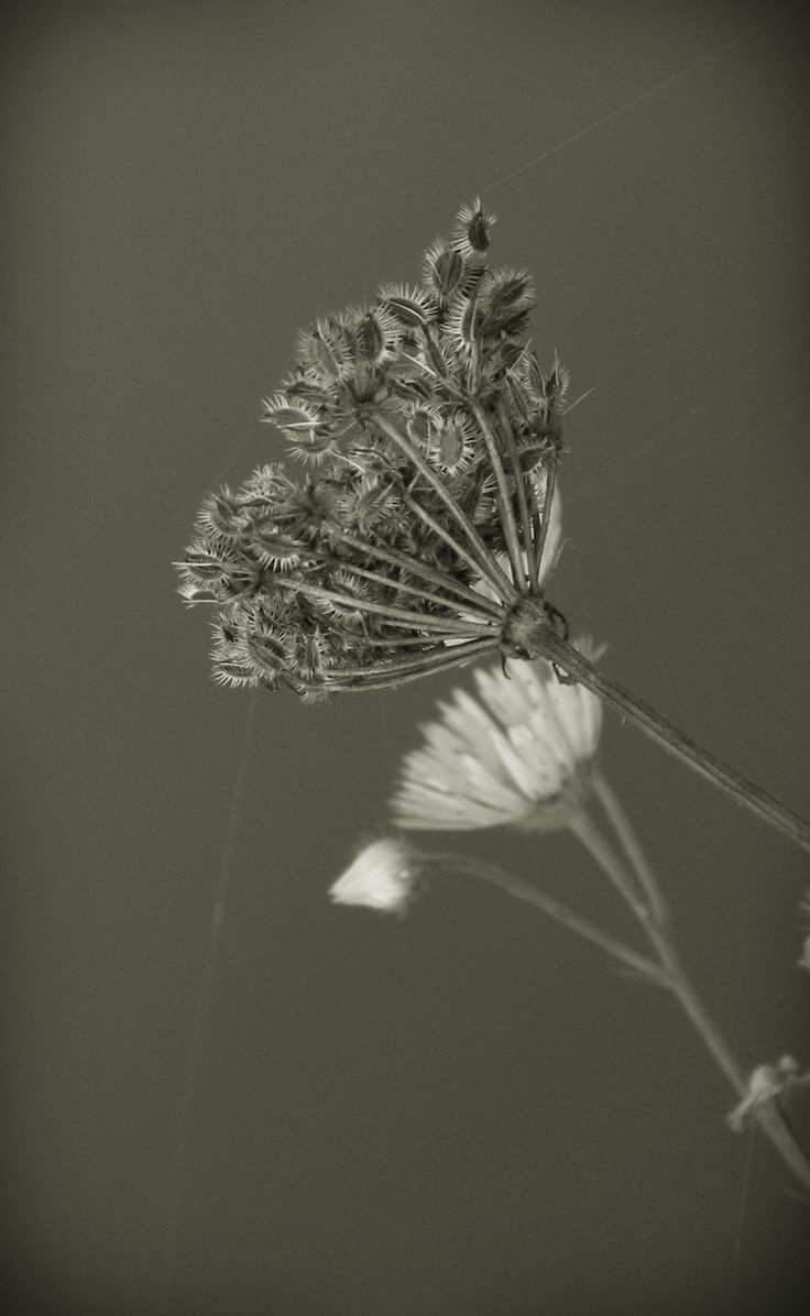 Photo Macro phptography by Karolina Staniszewska on 500px