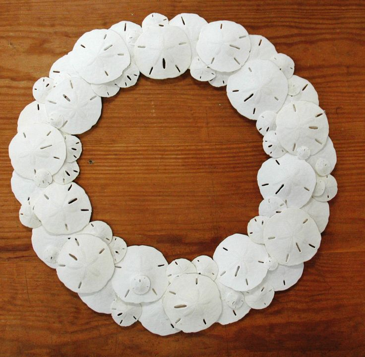 sand dollar wreath - Google Search