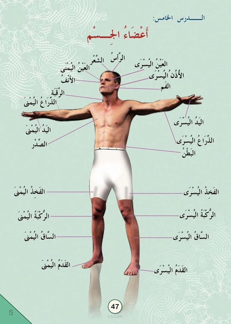 Parts of the body in Arabic.