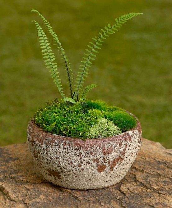 Moss For My Luv. This Website Has The Most Beautiful Moss And Stone Gardens!  I Am Now Finally Delighted With The Idea Of Having A Shady Garden.