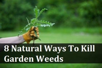 8 Natural Ways To Kill Garden Weeds