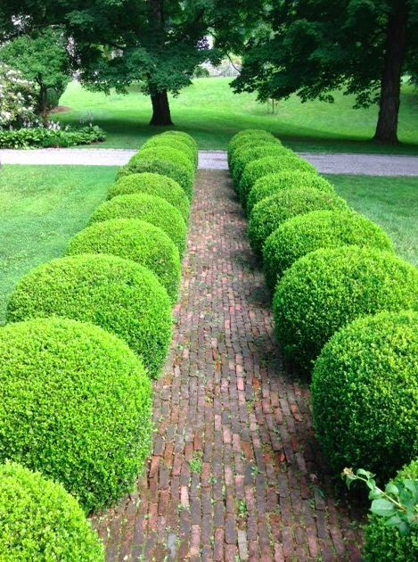 Round boxwood along walkway gardens boxwood for Garden design ideas with hedges