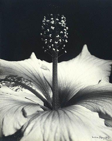 Hibiscus | Man Ray